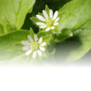 Herbs that absorb fat and suppress appetite
